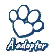 À adopter